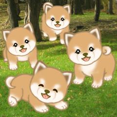 สติ๊กเกอร์ไลน์ Puppy of Mameshiba (No words)