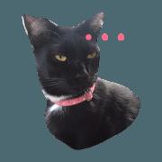 สติ๊กเกอร์ไลน์ กะปิแมวดำและพวกพ้อง