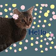 สติ๊กเกอร์ไลน์ Mimi my lovely cat