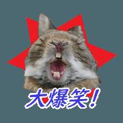 สติ๊กเกอร์ไลน์ Netherland Dwarf cute rabbit