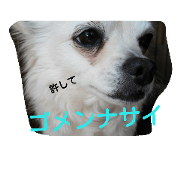 สติ๊กเกอร์ไลน์ cute dog ,koro