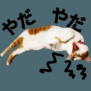 สติ๊กเกอร์ไลน์ Mitama Neko
