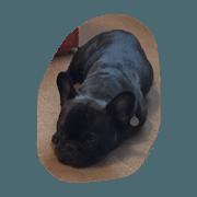 สติ๊กเกอร์ไลน์ Black French Bulldog