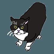 สติ๊กเกอร์ไลน์ I LOVE CAT CAT CAT