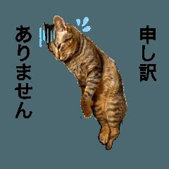 สติ๊กเกอร์ไลน์ Otokuniya_20210914125651