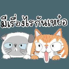 ชิเอลแมวมึน คิรัวร์ตัวป่วน
