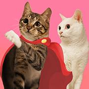 สติ๊กเกอร์ไลน์ SoybeanMilk & JunRon Cat 1