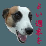 สติ๊กเกอร์ไลน์ Jack Russell Terrier run [boss]