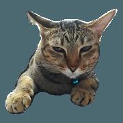 สติ๊กเกอร์ไลน์ Hello every day : Pui The Cat