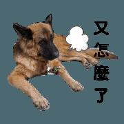 สติ๊กเกอร์ไลน์ The heart voice of the dog