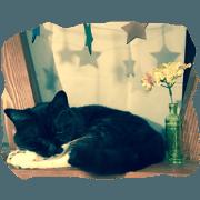 สติ๊กเกอร์ไลน์ White sock black cat
