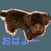 สติ๊กเกอร์ไลน์ Moco the poodle