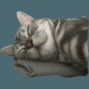สติ๊กเกอร์ไลน์ cat, life