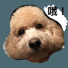 สติ๊กเกอร์ไลน์ cute dog gai gai