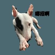 สติ๊กเกอร์ไลน์ bull terrier toby