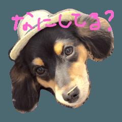สติ๊กเกอร์ไลน์ roy dog ver.1