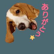 สติ๊กเกอร์ไลน์ beagle's sticker