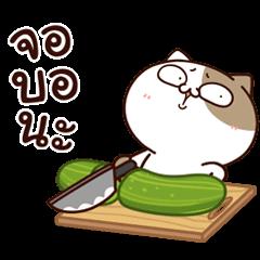 แมวเต้าหู้ : คำฮิตติดปาก