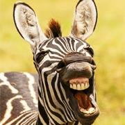 สติ๊กเกอร์ไลน์ Comedy Wildlife Photography Awards comes