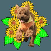 สติ๊กเกอร์ไลน์ Leo the Toy Poodle