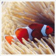 สติ๊กเกอร์ไลน์ Anemone fish with marine life