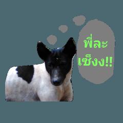 สติ๊กเกอร์ไลน์ cat dog at Nan