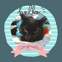 สติ๊กเกอร์ไลน์ black cats hayato&hinata