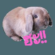 สติ๊กเกอร์ไลน์ ซากาย กระต่ายน่ารัก