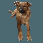สติ๊กเกอร์ไลน์ Life of Happy, a Mix dog.
