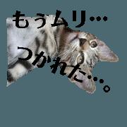 สติ๊กเกอร์ไลน์ Home of cats by.mK