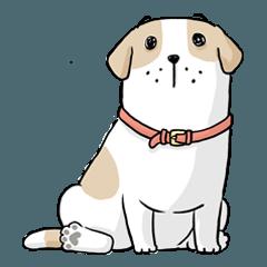 หมาจ๋า 2561 (2)