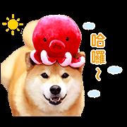 สติ๊กเกอร์ไลน์ Shiba Maru