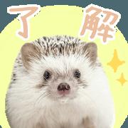 สติ๊กเกอร์ไลน์ Hedgehog Noel