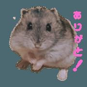 สติ๊กเกอร์ไลน์ hamster