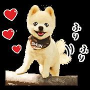 สติ๊กเกอร์ไลน์ หมาน้อยชุนซุเกะคุง