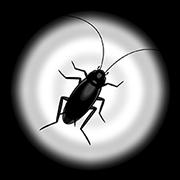 สติ๊กเกอร์ไลน์ Cockroach Moving: Climbing Your Screen