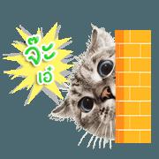 สติ๊กเกอร์ไลน์ Nala Cat, Coffee and Luna Animated (TH)