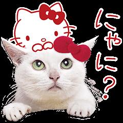 あなごちゃん×ハローキティ | StampDB - LINEスタンプランキング