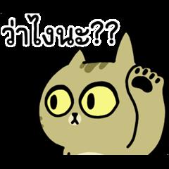 The cat's slave Sinko แมวกวนจากไต้หวัน