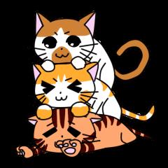 3 sisters' cat
