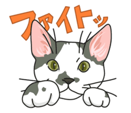 NO CAT NO LIFE Satowo cat stamp sticker #76539