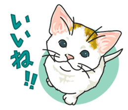 NO CAT NO LIFE Satowo cat stamp sticker #76545