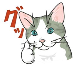 NO CAT NO LIFE Satowo cat stamp sticker #76567
