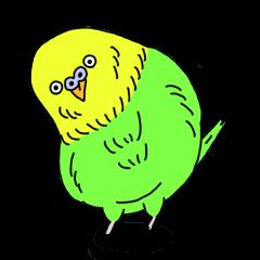 Parakeet!