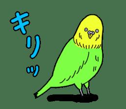 Parakeet! sticker #87248