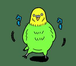 Parakeet! sticker #87254