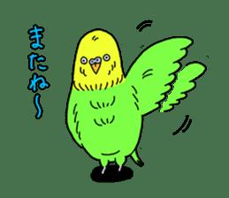 Parakeet! sticker #87263