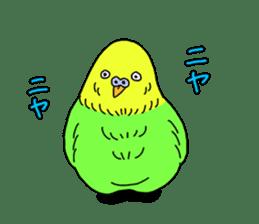 Parakeet! sticker #87264