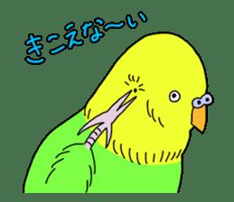 Parakeet! sticker #87275