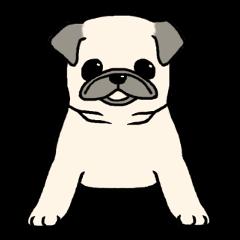 Kurukuru Pug